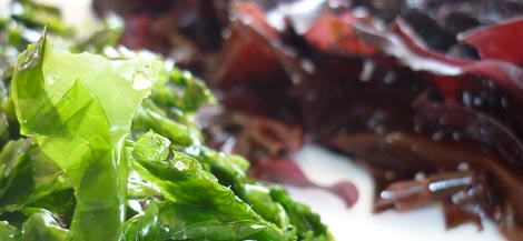 Seaweed 2