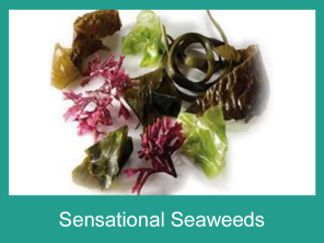 Organic Edible Seaweeds