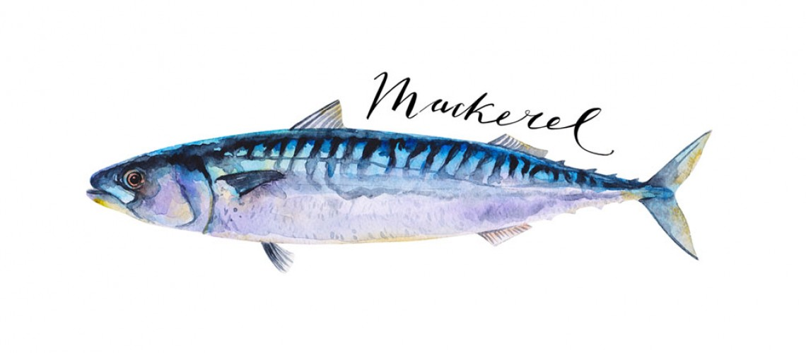 The Humble Mackerel